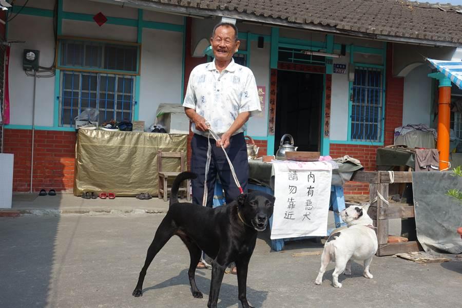 小黑脾氣很不好,幸運的是牠有一個全村對狗最好的主人「勇伯」,圖右是牠的剋星「肯醬」。(周麗蘭攝)