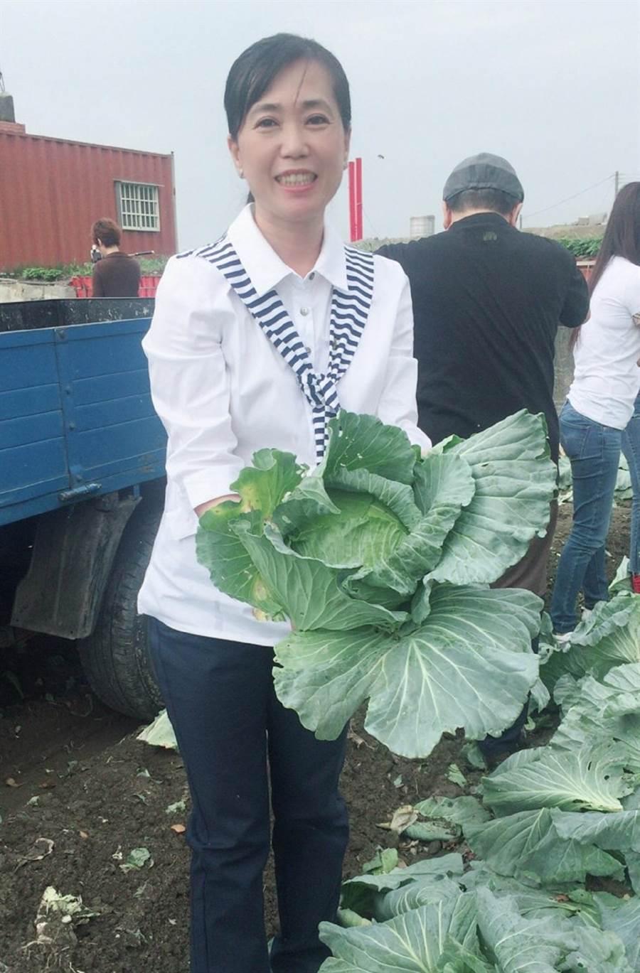 縣議員候選人黃美蘭下鄉採購高麗菜,了解農民的心聲。(張朝欣攝)