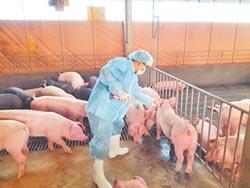 日傳豬瘟 相關肉品禁止入台