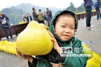 秋冬養生食柚子 降血糖防感冒