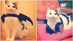 超喜感!IG爆紅「微笑貓」牠的臉真的不是P上去的