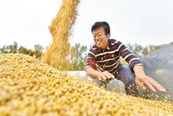 中美角力 大豆反制-陸撼動大豆市場 爭定價發言權