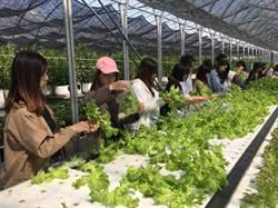 盡社會責任  大學生參與在地農作