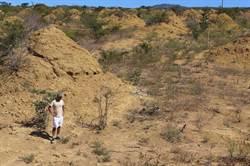 白蟻建出「英國大小」土丘群!專家驚嘆:挖了3800年
