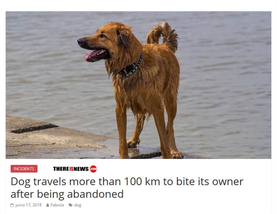 有些網友質疑新聞的真實性 認為主人可能只是認錯狗了(圖/翻攝自Reddit)