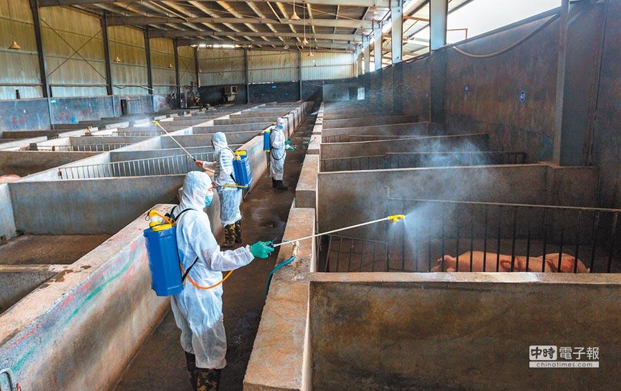 浙江金華金東區畜牧獸醫局工作人員近日對區內養殖場、屠宰場進行全面消毒,嚴防非洲豬瘟。(CFP)