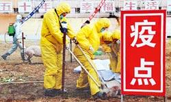 非洲豬瘟入京 陸已殺60萬隻豬