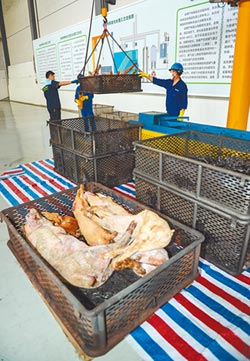 豬瘟從境外傳入 陸點名俄、波蘭