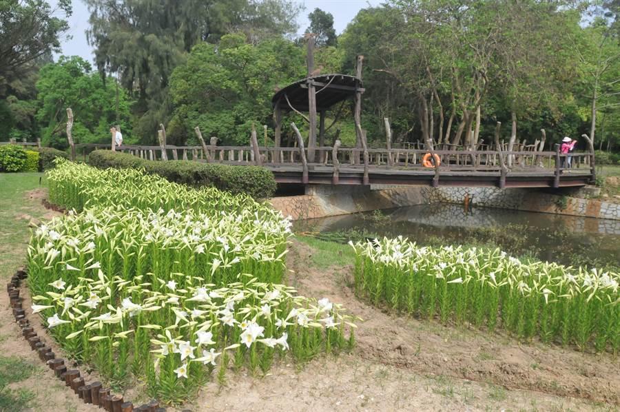 金門縣林務所在太武山腳的植物園建置螢火蟲復育區,並採集地區分布的螢火蟲進行保種培育。(李金生攝)
