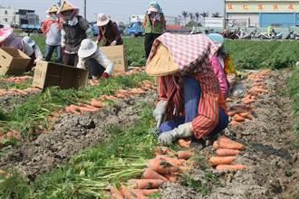 紓解農業缺工問題 將軍農會招募台南農業師傅