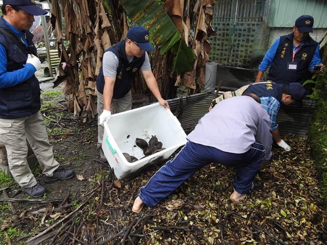 江姓老翁(前右)辯稱飼養繁殖食蛇龜是為了保育野生動物。(許家寧翻攝)