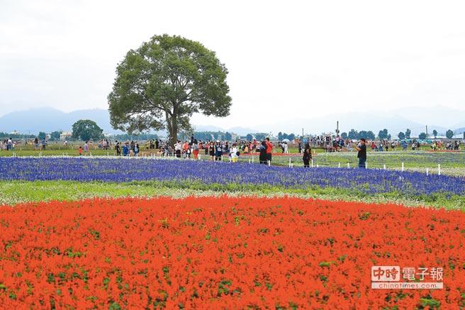 2017年台中市新社花海美景,吸引大批人潮。(本報系資料照片)