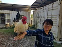 官田時生農場 公雞SNOOPY扮演最佳吉祥物