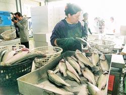 漁業縣綠變藍 魚貨爭取銷陸