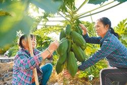 AI助農戶 解決作物病蟲害問題