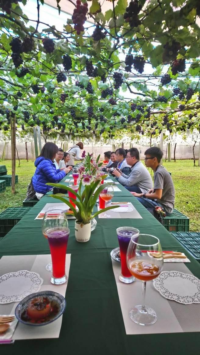 新峰農場推出的「葡萄樹下的下午茶」,贏得海外遊客的青睞。(圖/曾麗芳)