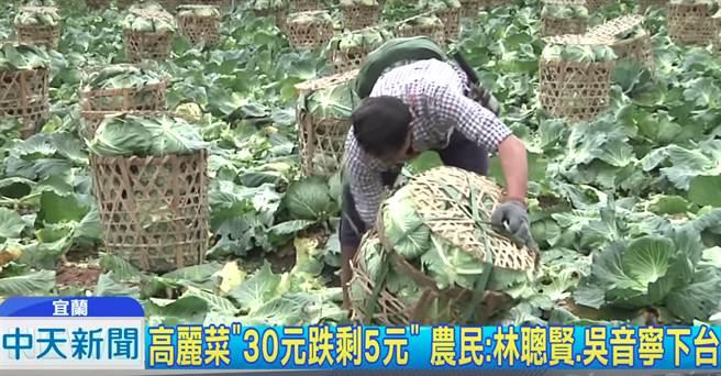 高麗菜盛產「紙箱比菜還貴」農民怒批這林聰賢、吳音寧下台(中天新聞)