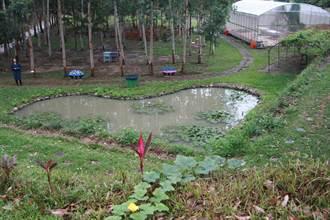 龍昇社區金質獎生態園區 桉心園推農村體驗貼近自然