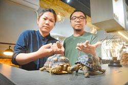 愛龜成痴 爬蟲餐廳成新樂園