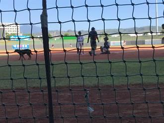 關懷盃棒賽太精彩 狗狗也想看球趕不走
