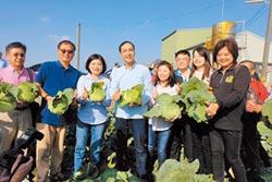 朱赴雲林 採購400公噸高麗菜