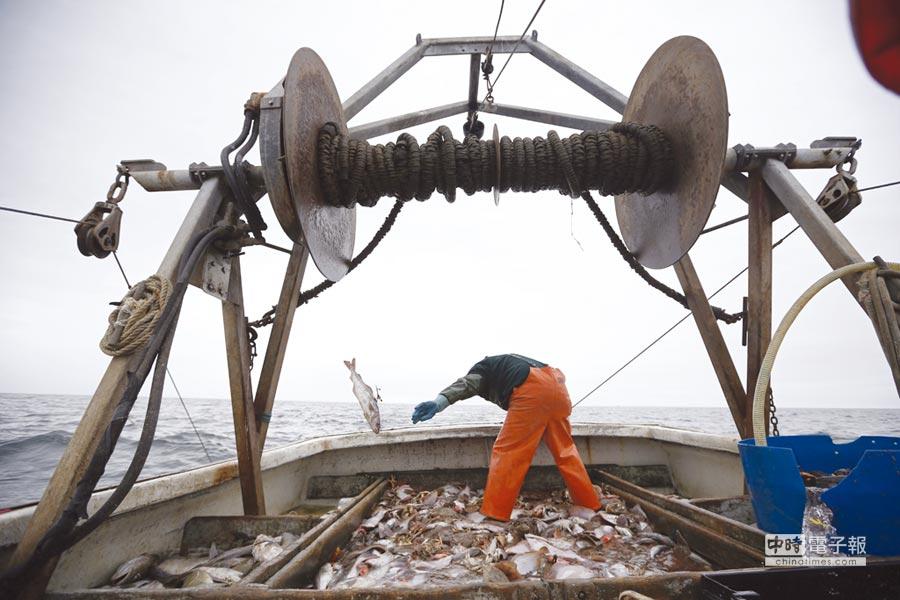 冰島鱈魚商品熱賣圖╱美聯社