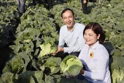 高麗菜盛產價跌 新北果菜公司直銷團購挺農友