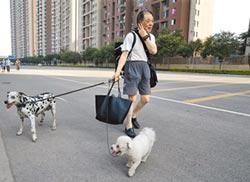 犬患日增 運動式執法不治本