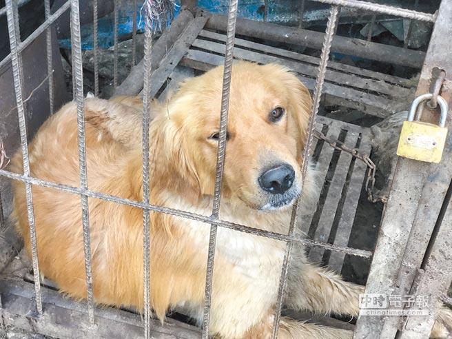 杭州祭出最嚴限狗令後,西安、青島、長沙、等大陸多個城市也相繼出台嚴格的養狗政策。圖為示意圖。(CFP)