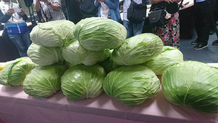 高麗菜盛產價跌,新北果菜公司啟動團購機制,即日起每箱高麗菜以保證價格每公斤10元向農民收購直銷。(譚宇哲翻攝)