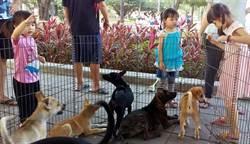 林招吟媒介流浪狗貓認養 助2000隻浪浪找到新家