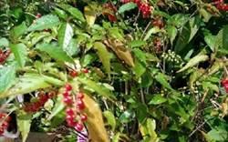 超常見的植物竟有毒! 她發文警告兒童小心別碰