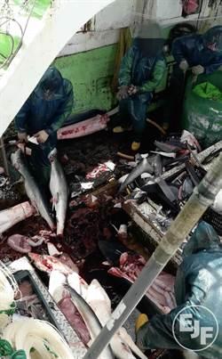 EJF再揭台灣漁船非法捕鯊 漁業署:已介入調查