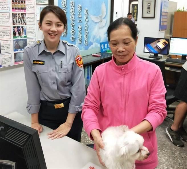 在馬路狂奔的馬爾濟斯犬被哄騙至派出所後,相當乖巧,員警也很喜歡。(賴佑維翻攝)