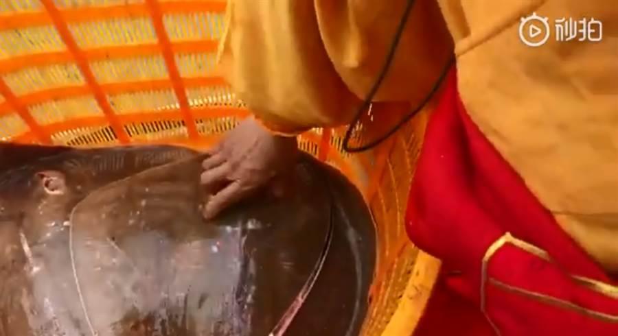 法師直接將手插進魟魚的噴水孔以拿起牠(圖/翻攝自微博)