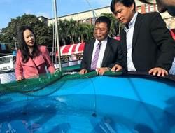 錦鯉女王鍾瑩瑩:觀賞魚產業歡迎新血投入