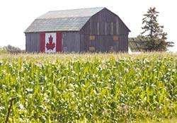 暖化讓玉米往北生長