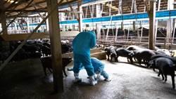 非洲豬瘟防疫 農委會:我國將參與OIE東亞工作小組