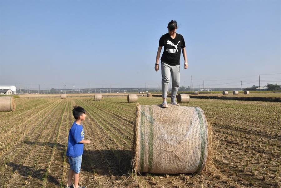 雲林許多稻田最近出現稻草捲,吸引民眾帶著孩子到田間玩耍。(周麗蘭攝)