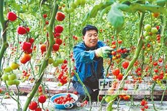 戈壁農業壯大 搶攻亞洲市場