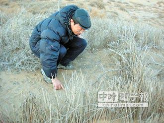 藻治荒漠化 為移民火星開路