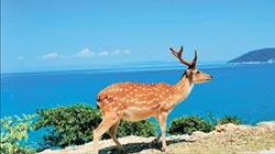 梅花鹿吸客 大坵打造度假島