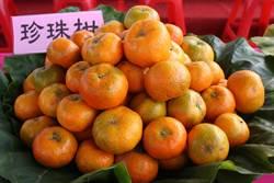 中寮「珍珠柑」甜蜜上市 今年雨水少甜度更提升農會大力促銷