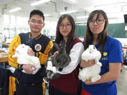 北門農工動物多 山豬、兔子寵物兼助教