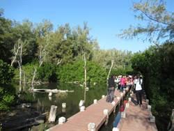 北門雙春遊憩區 紅樹林木棧道整修完成快來探險