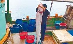 花蓮漁民捕獲2米長地震魚