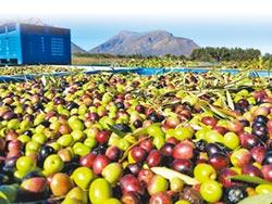 達人帶路 玩味體驗橄欖油