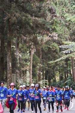 亞瑟士路跑「重質不重量」   森林系享芬多精