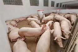 非洲豬瘟若襲台 恐衝擊9成消費者荷包