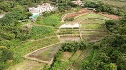 三芝樂天社區梯田改善有成 地恢復農耕